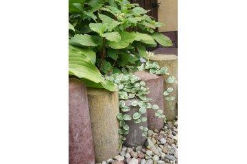 Палисада Ринг, польский садовый бордюр, Superbet 6